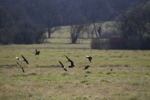 Birds on Common