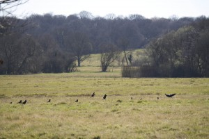 More birds on Common
